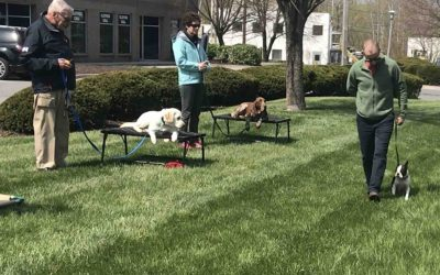 How to find the RIGHT dog training for you and your pet