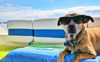 Road Trip!!! Travel with your dog this summer