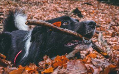 It's officially autumn…